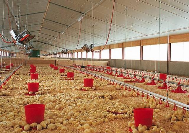Отопление фермы